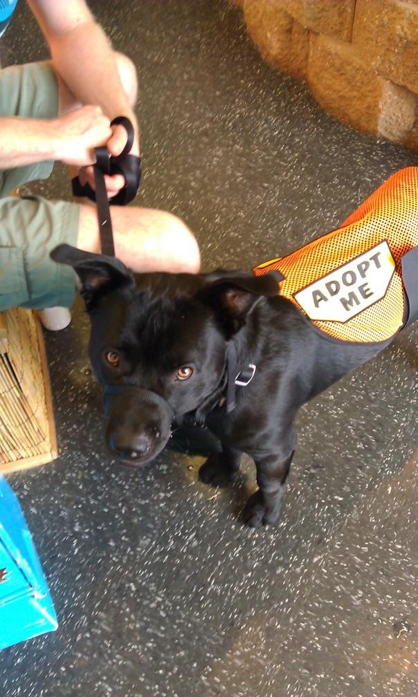 My foster dog Charlie Machete