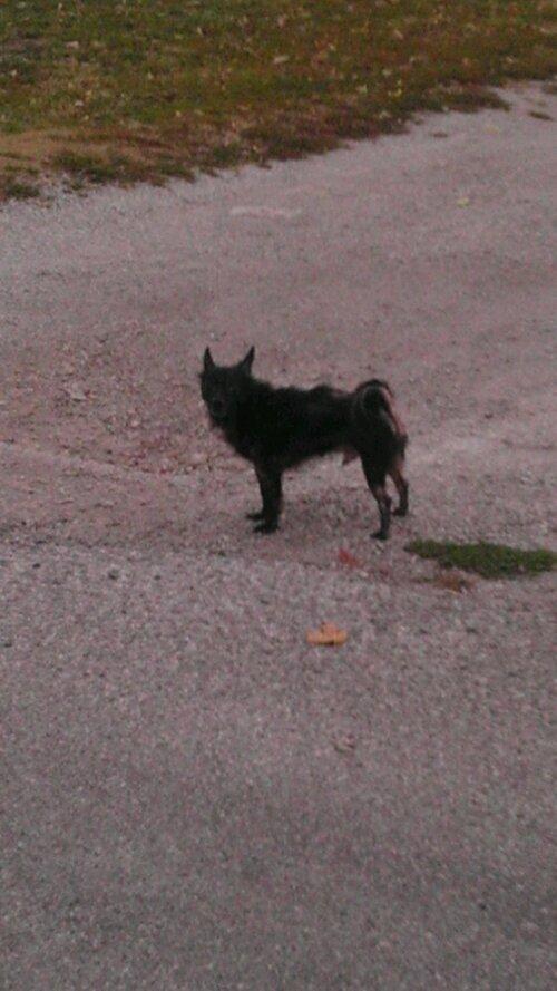 Spooky Chihuahua