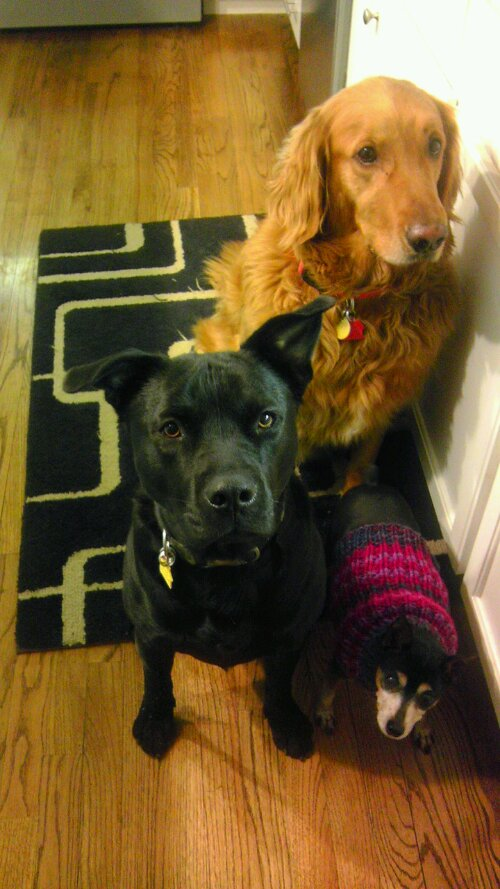 Three handsome beggars