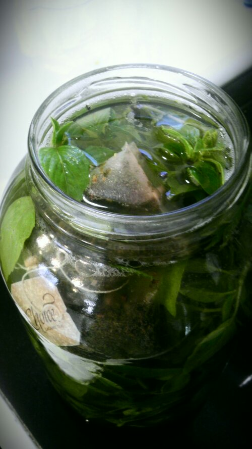 Basil sprigs and tea bags in pickle jar.