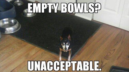 empty food bowls - unacceptable