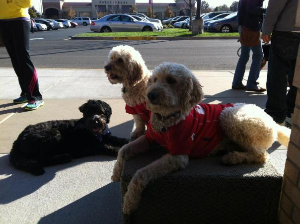 poodle mixes in Chiefs t-shirts