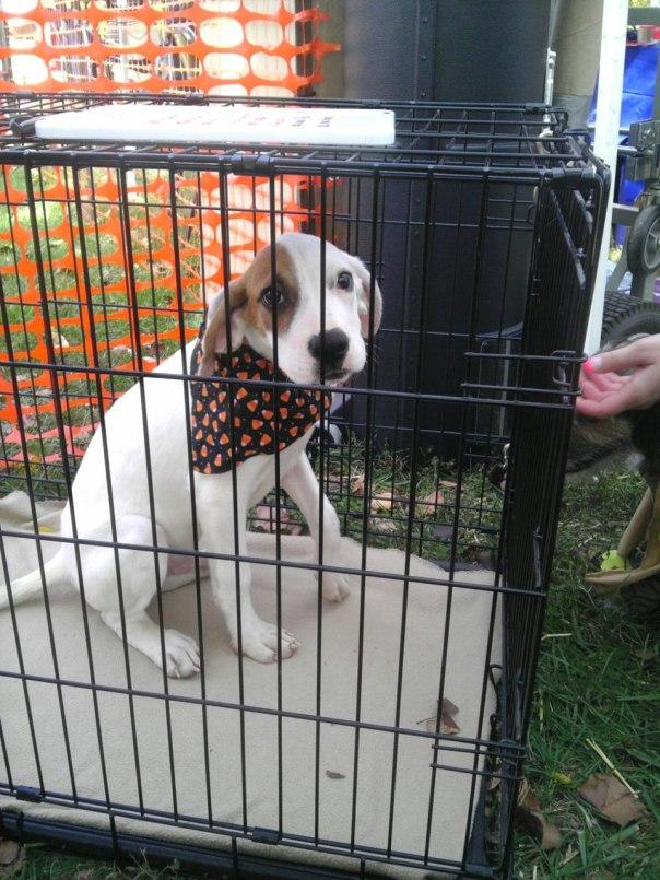 hound dog mix
