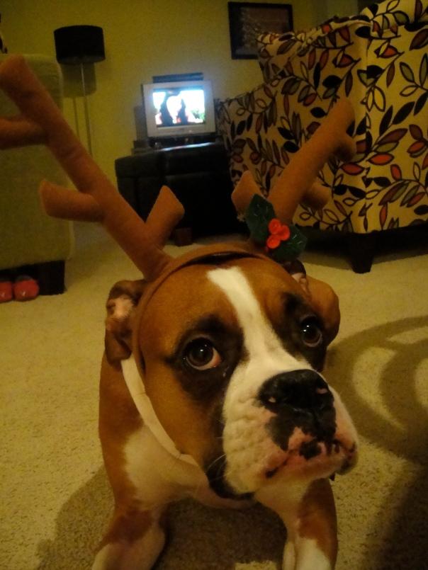 boxer pout face