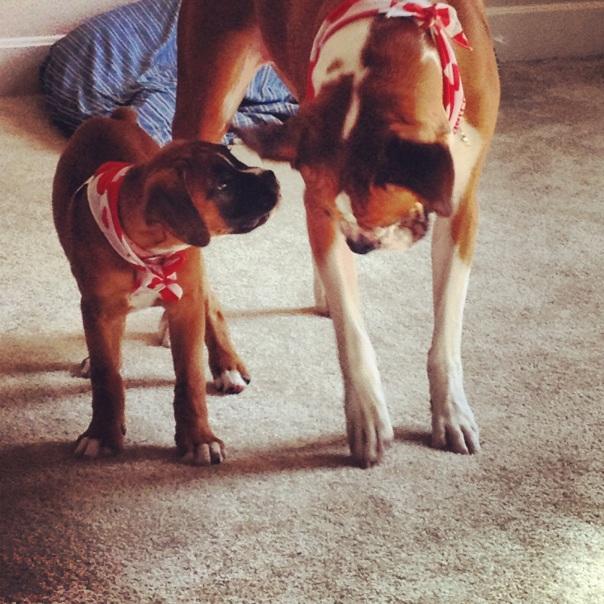 boxers in bandanas
