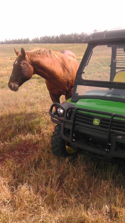 horse and a John Deere Gator