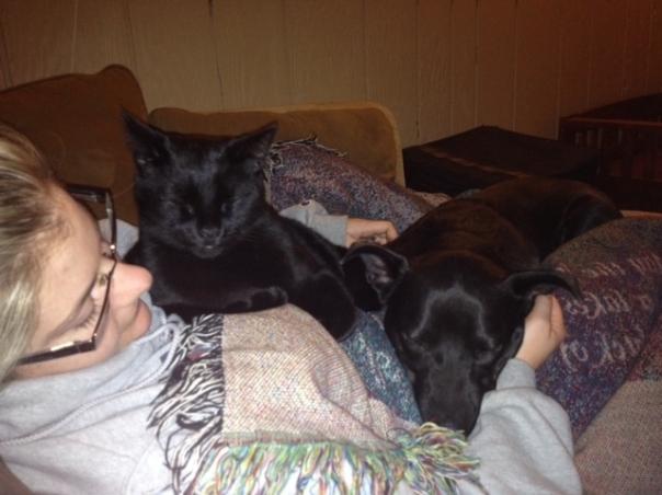black dog and black cat snuggle