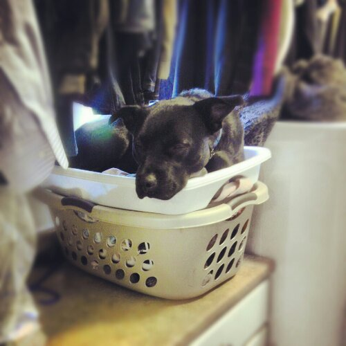 Charlie Machete in a laundry basket