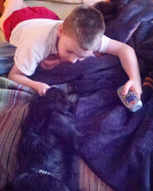 Jacob and Pongo labradoodle