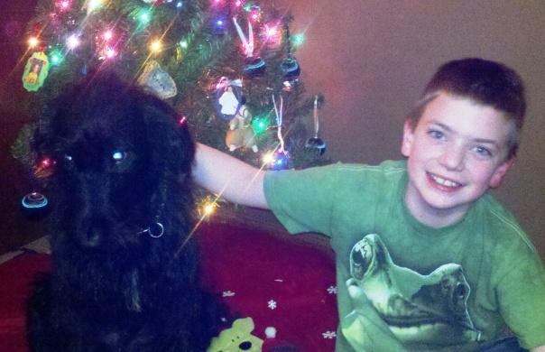 Jacob and Pongo labradoodle