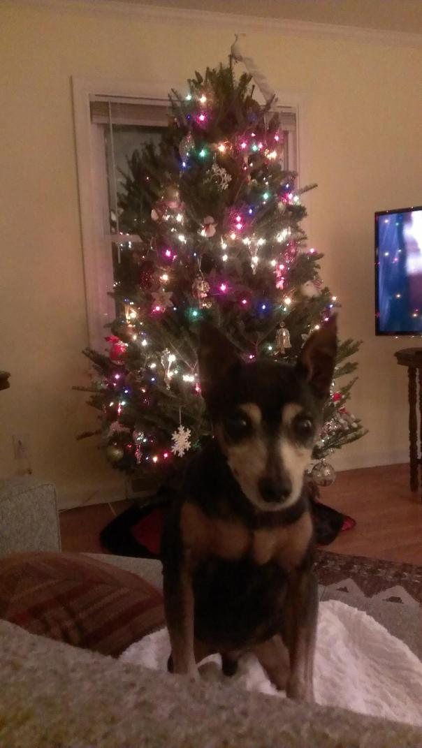 small dog with christmas tree