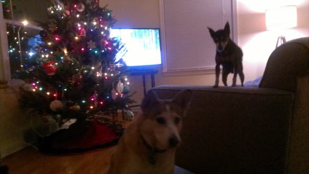 dogs in front of xmas tree