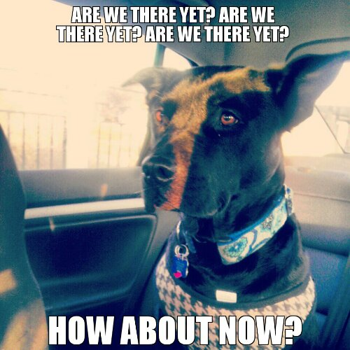 We Car: Dog In Car Meme