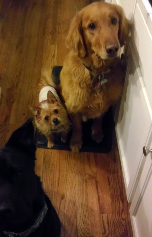three dogs beg