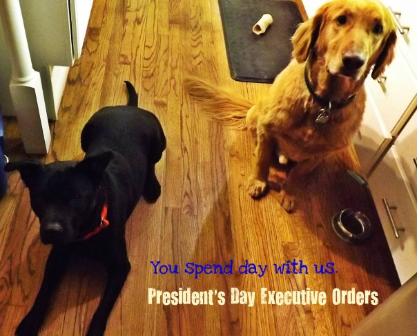 presidents day dog meme