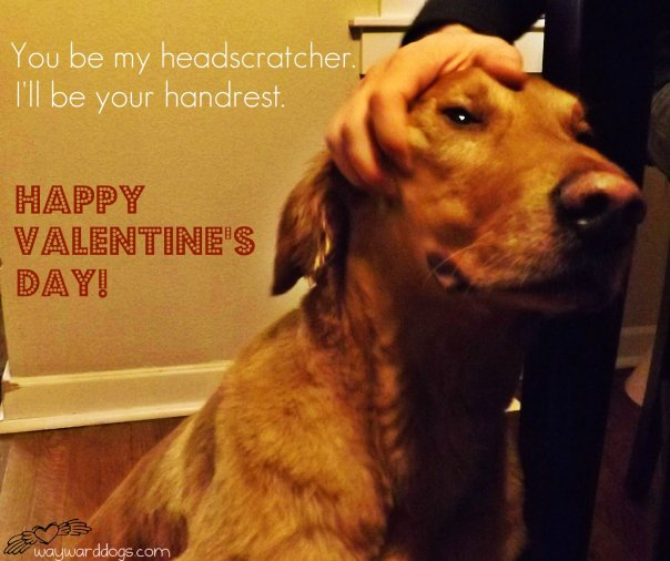 golden retriever valentine