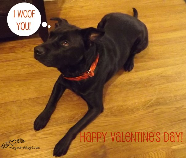 black dog valentine