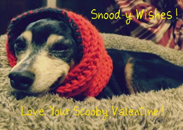 miniature pinscher snood valentine